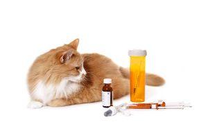 farmac animales
